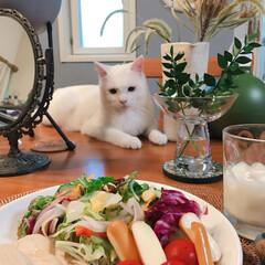 飼い主はダイエット中/ペット/おうちごはん/飼い主ごはん見守り隊 はい。また見つめられています😵💦 テーブ…
