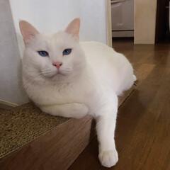 猫/ねこ/爪とぎ/猫と暮らす/にゃんこ同好会 斜めになってる爪とぎにしたら マロばかり…(1枚目)