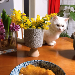ねこと暮らす/猫との暮らし 飼い主の手抜き朝ごはんを見守る。。 🐱ヤ…(2枚目)