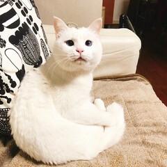 猫と暮らす/ペット かーたん ここあったかいニャ💓 ホカペつ…