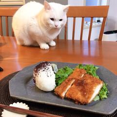 ねこと暮らす/猫との暮らし/皿 昨日信楽の古谷製陶所で買ったお皿で朝ごは…(3枚目)