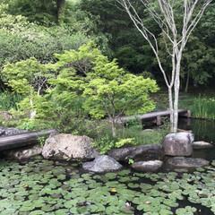 水蓮池/水蓮/早朝ウォーキング/散歩コース 今朝のウォーキングはご近所の水蓮池へ🐾🐾…(5枚目)
