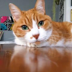 茶トラハチワレ/ファブリックパネル手作り/セルフペイント壁/ねことの暮らし/猫との暮らし/ねこと暮らす/... 次のごはんが待ち遠しいニャ。。(2枚目)