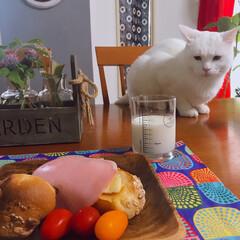 タイガーコペンハーゲン/猫との暮らし/パン フランスパン🥖をカリッ!と焼いて、バター…