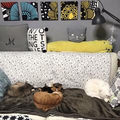 ソファー/ねことの暮らし/ねこと暮らす 夜はホカペ敷いてるソファーで寝るニャンズ…(7枚目)