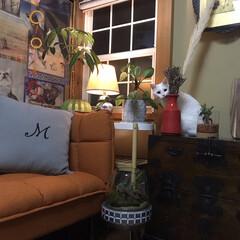 しろねこマロたん/白猫/元和室/ねこ/猫との暮らし/ねこと暮らす モニターをしているソファーベッドです。 …(1枚目)