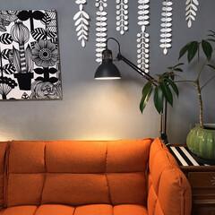 marimekkoパネル/セルフペイントの壁/ソファーベッド/猫との暮らし/ねこと暮らす/インテリア/... モニターをさせて頂いたソファーとニャンズ…(2枚目)