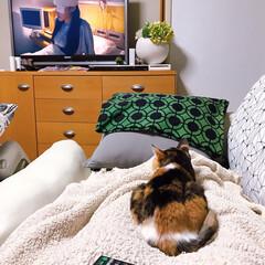 カラフルインテリア/猫との暮らし/ねこと暮らす 食べ物見るコ、テレビ観るコ。(3枚目)