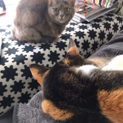 ねことの暮らし/猫との暮らし ニャンコ関係 その時によって強い弱いが変…(5枚目)