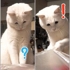 猫と暮らす 何やねんコレ…  あっ爪引っかかった!