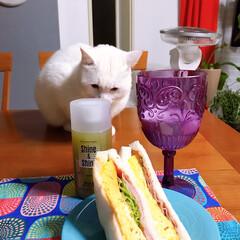 カラフルインテリア/猫との暮らし/ねこと暮らす 食べ物見るコ、テレビ観るコ。(2枚目)