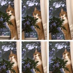 窓辺/猫と暮らす オトコのコだけど、とっても優しくて甘えん…