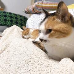 きょうだい猫/ねこと暮らす/猫との暮らし ちょっと〜 あのひと寝てばっかりよ💢 つ…(3枚目)