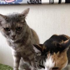 エノコログサ争奪戦/エノコログサ/ねこ/猫/ねこと暮らす/猫との暮らし やったにゃ!今日はエノコロのお土産ニャ❤️(6枚目)
