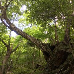 真夏に頑張る樹