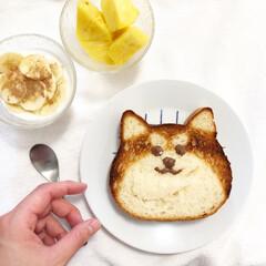 パン/料理/柴犬/食パンアレンジ/食パン/おうちごはん/... 人気のねこねこ食パンをアレンジしました!…