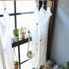 カーテン/カフェ/ガーゼ/ハンドメイド/ステンレスピンチ/100均/... キッチンのコーナーに、小さいですが植物を…