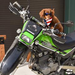 ベストショット/ツーリング/愛犬/バイク/ファッション/ペット/... Summer☀️ぼくの名前はRON. こ…
