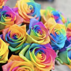 雨/梅雨/花/レインボーローズ/散歩/グルメ/... 花に興味がなかった私が  花好きな大切な…