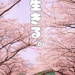 100日後に死ぬワニ/きくちゆうき/ワニ/ネズミ/生きる/桜/... よくね?🐭