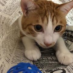 猫トンネル/友にゃん/保護にゃん/ペット/ハンドメイド/猫/... 友にゃん🐈キキくんは猫トンネルでおおはし…(1枚目)