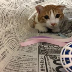 猫トンネル/友にゃん/保護にゃん/ペット/ハンドメイド/猫/... 友にゃん🐈キキくんは猫トンネルでおおはし…(2枚目)