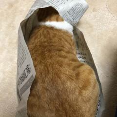 猫トンネル/友にゃん/保護にゃん/ペット/ハンドメイド/猫/... 友にゃん🐈キキくんは猫トンネルでおおはし…(5枚目)