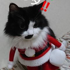 保護にゃん🐱しらす/クリスマス2019/リミアの冬暮らし 保護にゃん🐱キジトラ猫さん🎵 名前つけま…(4枚目)