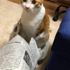 猫トンネル/友にゃん/保護にゃん/ペット/ハンドメイド/猫/... 友にゃん🐈キキくんは猫トンネルでおおはし…(3枚目)