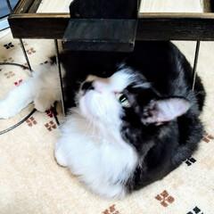 猫さん大好き/花台リメイク/タイルのある生活/タイル雑貨/ハンドメイド/手作り/... タイル雑貨DIY! 今回は、高さのある、…(5枚目)