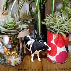 アンティーク エイジング 塗料 P-Effector ザラザラベース(ペンキ、塗料)を使ったクチコミ「リメ缶多肉植物サイズです。底穴が空いてる…」(4枚目)
