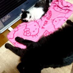 くーちゃん!でか😨/北海道/ストーブ/ペット/猫 おはようございます‼️ 北海道普通にスト…