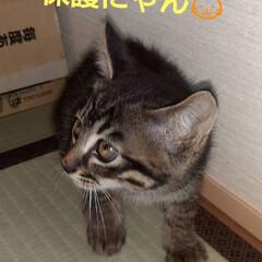 にゃん倶楽部/キジトラ/保護猫🐈 おはようございます🤗 昨年、秋に保護した…