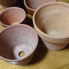 リサイクル/素焼き鉢リメイク/100均/簡単/おしゃれ 素焼き鉢リメイク🖌️ 5号、6号鉢‼️ …(3枚目)