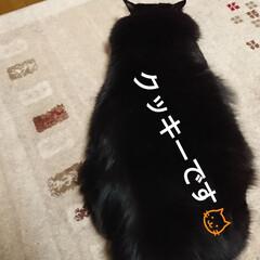 黒猫さん🐱/にゃんこ同好会🐱/暮らし 我が家の黒猫さん🐱クッキー‼️ ストーブ…