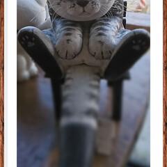 函館/旅行/秋/猫/おでかけ/旅 可愛い💕猫ちゃん🐈見つけました‼️