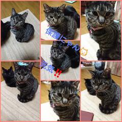 キジトラ猫ちゃん/保護にゃん🐈/リミアの冬暮らし 保護にゃん🐱その後・・・・☝️ まだ、里…