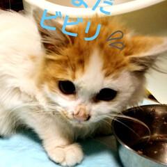家族/ペット/猫さん大好き/頑張れ/仔猫/トイレトレーニング/... 保護ニャンくん😸 今日からトイレトレーニ…(3枚目)