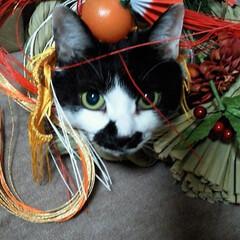 チャッピー🐈/あけおめ/フォロー大歓迎/冬/ペット/猫/... 明けましておめでとうにゃん🐈 障害ねこさ…