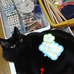 黒猫🐈クッキーいかがですか?女子3才❕/雨季ウキフォト投稿キャンペーン/令和の一枚/にゃんこ同好会/雑貨/ハンドメイド/... フリマ値札付けていたら・・・🐈
