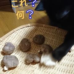 秋の味覚/干し椎茸/次のコンテストはコレだ! 秋の味覚‼️ 食べきれなかった「椎茸」我…