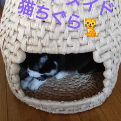 プレゼント✨🎁✨/猫ちぐら🐈/DIY/ハンドメイド/おすすめアイテム 我が家にも、猫ちぐらが来ました‼️ 弟く…
