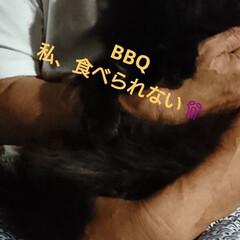 夏バテ/ニャンズ🐈/にゃんこ同好会/至福のひととき/リミアで大喜利 北海道🔥燃えるように暑い💦💦💦 ニャンズ…