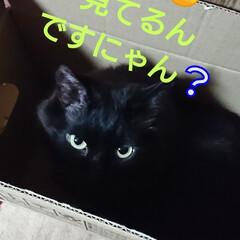 猫さん/暮らし おはようございます🙇 朝から、ニャンズ🐈…
