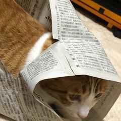 猫トンネル/友にゃん/保護にゃん/ペット/ハンドメイド/猫/... 友にゃん🐈キキくんは猫トンネルでおおはし…(4枚目)