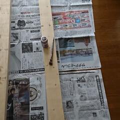キャットウォーク/DIY/DIY収納 今日はスイッチON‼️ 外は小雨☔で、部…(2枚目)