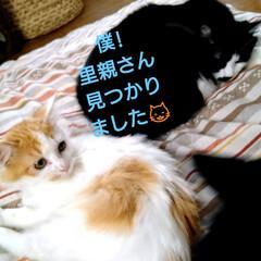 幸せになってね/お家決まりました✌️/北海道/猫さん大好き/保護ニャン おはようございます😸 保護ニャンその後で…