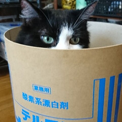 段ボール/猫‼️/にゃんクラブ またまた、会社から拾った丸い段ボール‼️…
