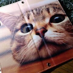 猫さん大好き/スマホケース/おしゃれ/猫/おうちご飯/お気に入りの食器/... スマホケース変えました🥰 やっぱり猫🐱さ…