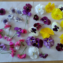 ガーデン 今日摘んだ花達です🎵 シリカゲルに入れて…
